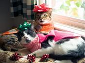 photos chats fêtent Noël