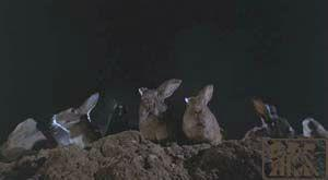 night_of_the_lepus2
