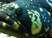 L'Aquarium Tropical Porte Dorée [avec plein photos dedans]