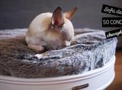 (PHOTOS) concept paniers design modulables pour chiens