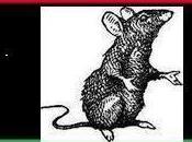 Libye prix trahison: vrais rats bouffent entre
