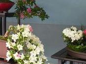 voie fleurs bonsaï d'azalées parc Ueno