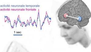 La LECTURE mobilise l'interaction de nos neurones à longue distance   – Inserm et Journal of Neuroscience