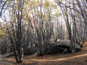 fond d'un forêt