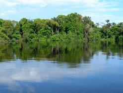 Brésil - Les indiens Awa d'Amazonie en «voie de disparition»?