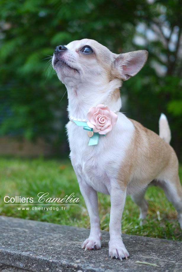collier perle chien