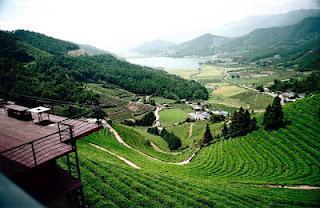 The Korean Way of Tea - La voie du thé coréenne