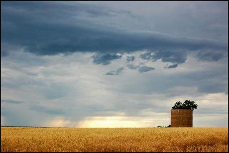 silo: planter for a tree