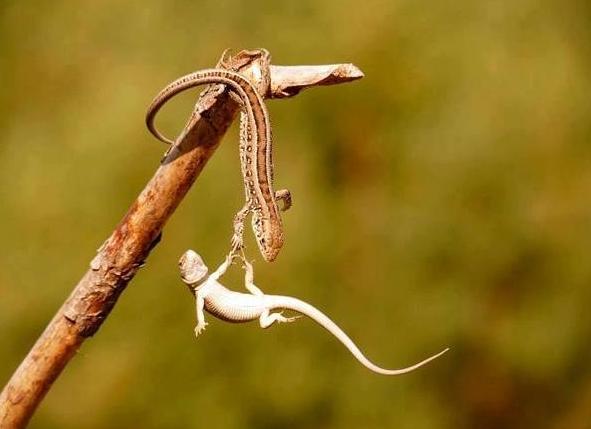 Bien-aimé Top 10 des photos d'animaux les plus insolites - Paperblog JA51