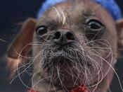 Mugly, chien plus laid monde