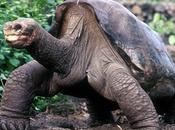dernière tortue géante s'est éteinte (R.I.P Georges)