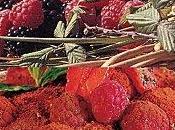 Coupe tiramisu fruits rouges