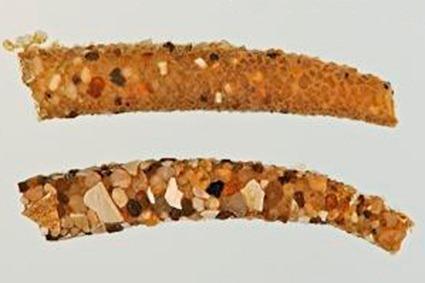 Fourreaux de Athripsodes sp