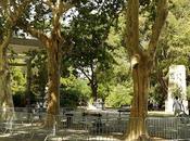 deux arbres mieux gardés pays