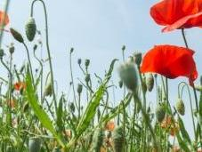espèces végétales bientôt moins bien protégées