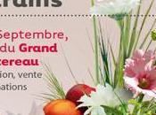 Folie plantes Nantes