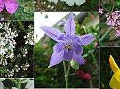 Vendredis #49: fleurs...les fameuses notes florales