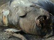 Éléphants danger pays africains tirent sonnette d'alarme