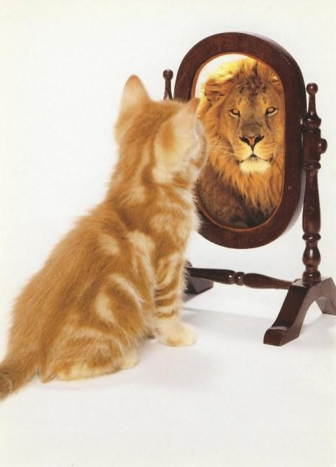 think positive lion chat miroir lion cat mirror confiance en soi estime de soi pensée positive bonheur