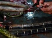 Alcool Venin Serpent Chine
