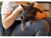 Inusité: chat orteils
