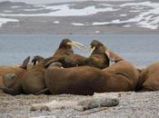 Total refuse forage Arctique