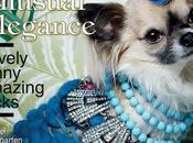 chihuahuas Fashion Overdressed dans Vogue Magazine