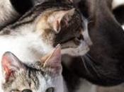 Chien chat: quel animal plus intelligent