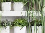plante anti-stress