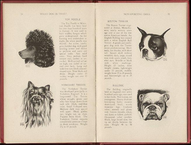 Livre anglais ancien – WHAT DOG IS THAT ?