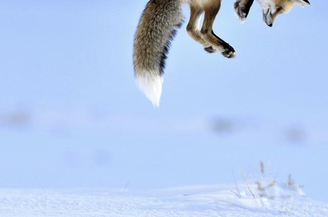 Wildlife Photographer 2012: le vainqueur