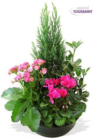 Interflora_coupe-de-plantes