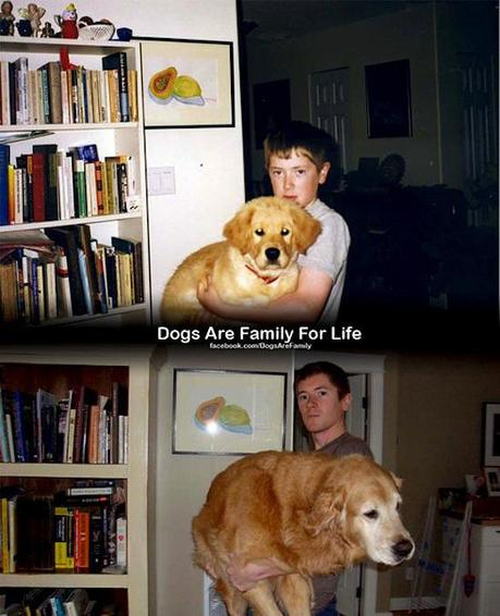 Dogs are family for life