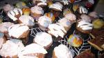 [Recette] Cupcakes d'Halloween