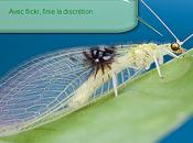 nouvelle espèce d'insecte découverte grâce Flickr