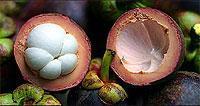 Le Mangoustan, un fruit qui change la vie !