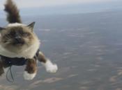 Insolite chats parachutistes dans suédoise