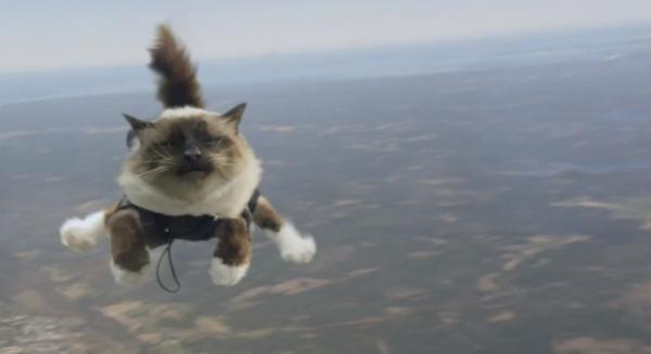 insolite des chats parachutistes dans une pub su doise d couvrir. Black Bedroom Furniture Sets. Home Design Ideas