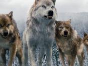 Nouvelles photos loups dans Breaking Dawn part