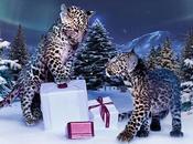 Winter Tale: Noël retour chez Cartier