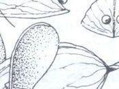 Petites souris noix