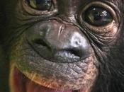 bébés animaux 2012