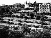 Vous aimez Liban?