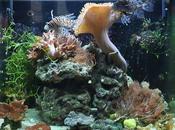 Notions d'aquariophilie marine récifale...