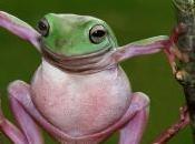 Hollande, élections, France. quand grenouille devient Président.