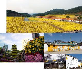 Les coréens et le chrysanthème