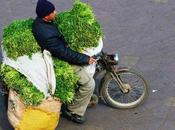 Vendez Ma3dnouss... c'est l'or Vert d'Ennahdha!!