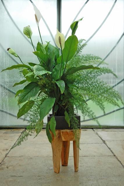Tableaux végétaux, quand la croissance n'est plus au rendez-vous...