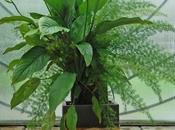 Tableaux végétaux, quand croissance n'est plus rendez-vous...