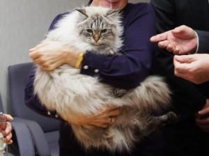chat mirou